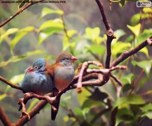 puzzel Aantal vogels