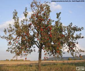 puzzel Appelbomen