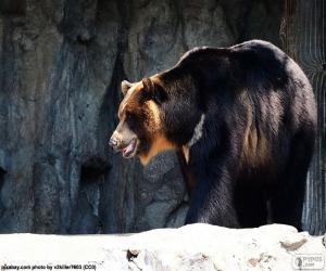 puzzel Aziatische zwarte beer of kraagbeer