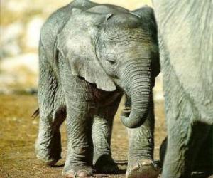 puzzel Baby olifant met zijn moeder