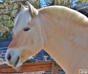 puzzel Beige paard hoofd