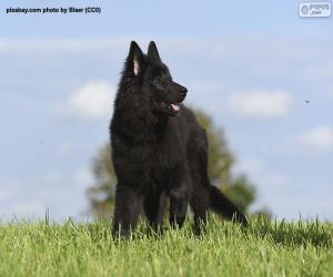 puzzel Belgisch herder groenendael puppy