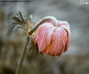 puzzel Bevroren bloem