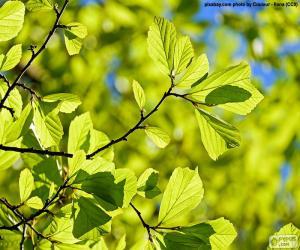 puzzel Bladeren van de boom