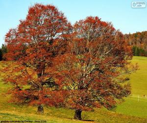 puzzel Bladverliezende bomen