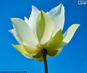 puzzel Bloem Lotus wit