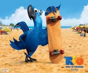 puzzel Blu is een leuk ara en de hoofdpersoon van de film Rio