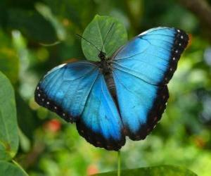 puzzel Blue butterfly