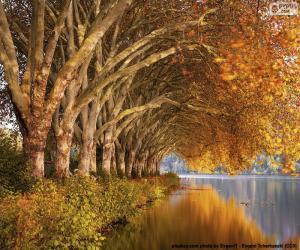 puzzel Bomen door het meer in de herfst