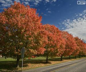 puzzel Bomen in de herfst