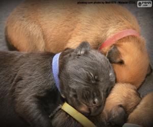 puzzel Boxer pups