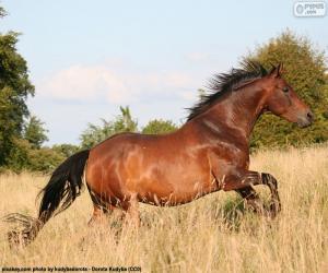 puzzel Bruin paard lopen