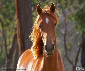 puzzel Bruin paard vanaf de voorzijde