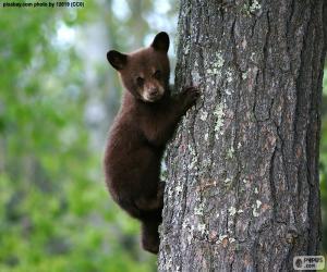 puzzel Bruine beer cub klimt een boom