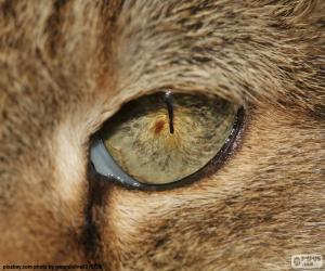 puzzel Cat's eye