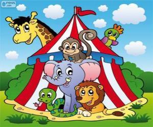 puzzel Circusdieren