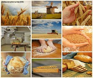 puzzel Collage van brood