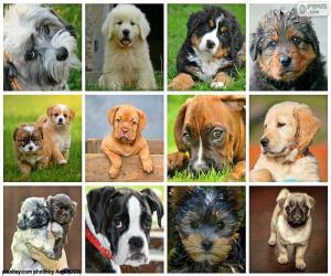 puzzel Collage van honden