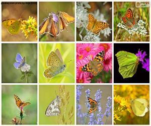 puzzel Collage van vlinders
