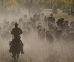 puzzel Cowboy leiden van een kudde