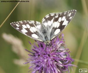 puzzel Dambordje wit vlinder