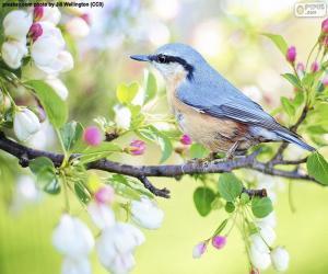 puzzel De blauwe vogel van de hemel