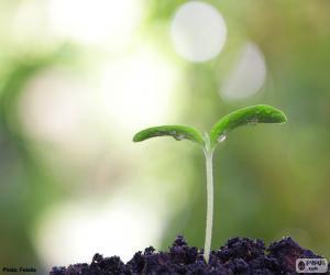 puzzel De geboorte van een plant