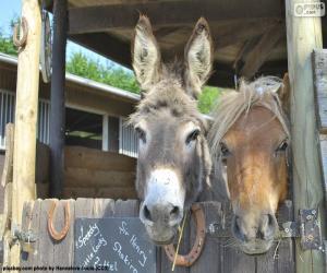puzzel De hoofden en de pony van de ezel