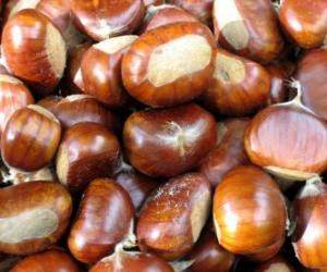 puzzel De kastanje, de vrucht van de kastanjeboom