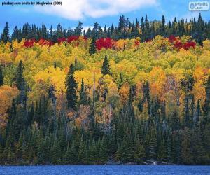 puzzel De kleuren van de herfst