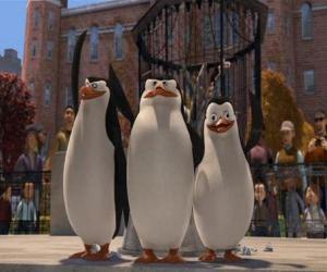 puzzel De pinguïns van de Central Park Zoo