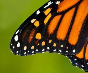 puzzel De vleugel van een vlinder