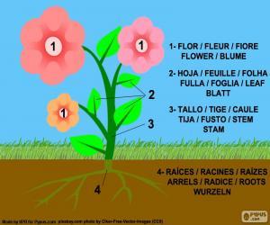 puzzel Delen van een plant