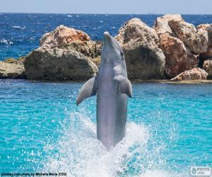 puzzel Dolfijn doet een truc