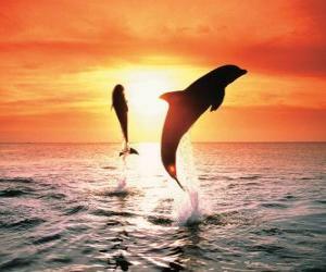 puzzel Dolfijnen bij zonsondergang