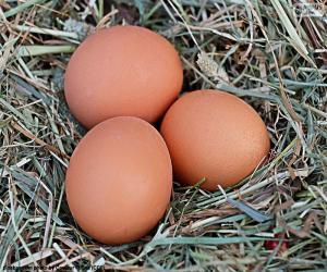 puzzel Drie eieren