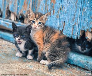 puzzel Drie kittens