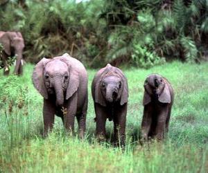 puzzel drie kleine olifanten