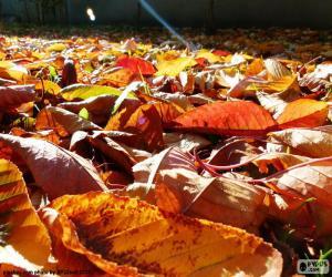 puzzel Droge bladeren in de herfst