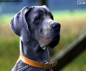 puzzel Duitse dog hoofd