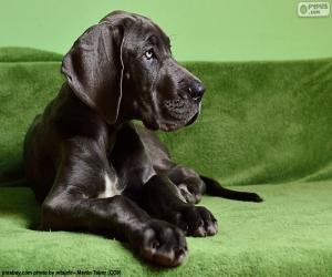 puzzel Duitse Dog pup