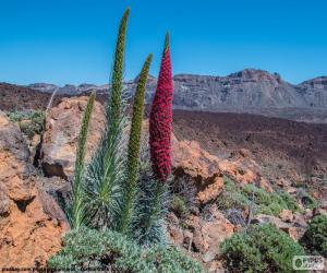puzzel Echium wildpretii, Tenerife