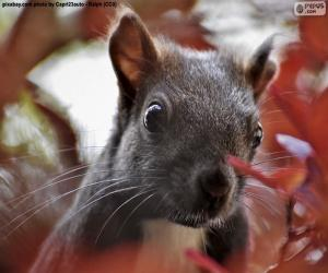 puzzel Eekhoorn gezicht