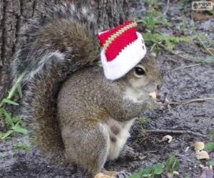 puzzel Eekhoorn met de hoed van de Kerstman