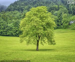 puzzel Een boom in de weide