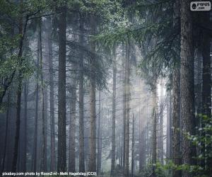puzzel Een dicht bos