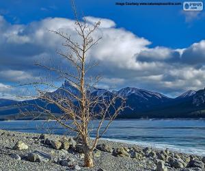 puzzel Een dode boom in de buurt van het meer