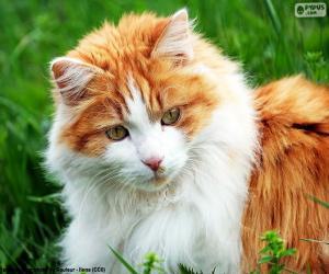 puzzel Een elegante kat