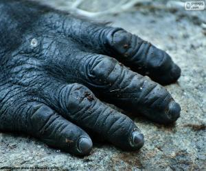 puzzel Een gorilla hand