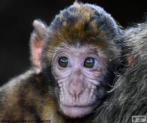 puzzel Een kleine aap gezicht